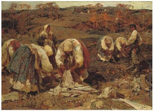 Колесников С. Ф. Сбор урожая картофеля в Белоруссии