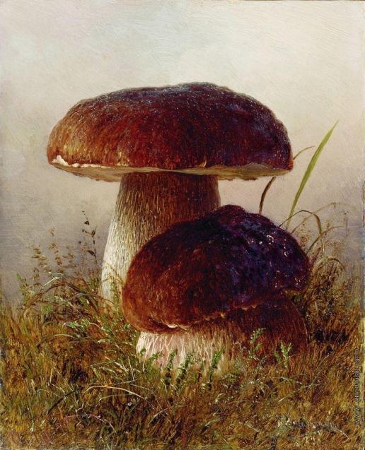 Кондратенко Г. П. Белые грибы
