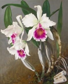 Чистовский Л. С. Натюрморт с бело-фиолетовыми орхидеями
