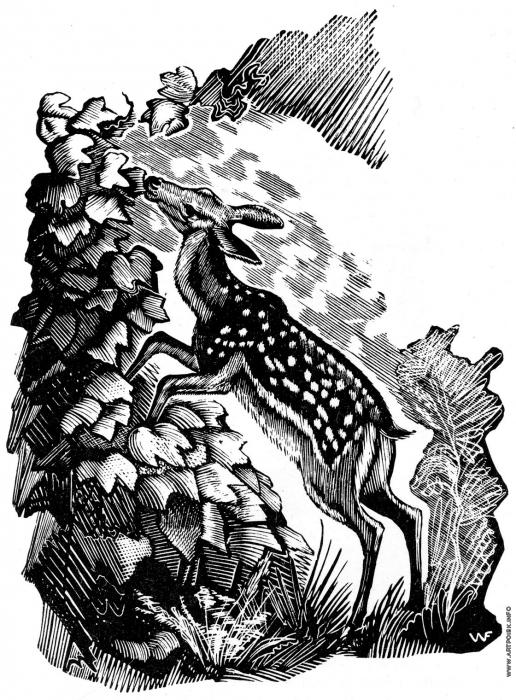 """Фаворский В. А. Иллюстрация к книге М. Пришвина. """"Женьшень"""""""