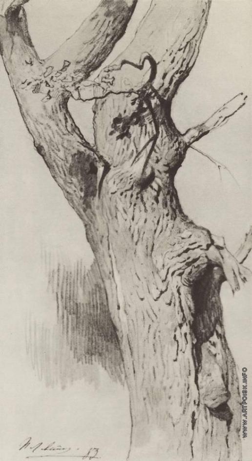 Левитан И. И. Ствол старого дерева