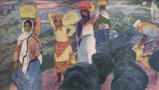 Абдуллаев М. Г. Сбор чая в Астаре