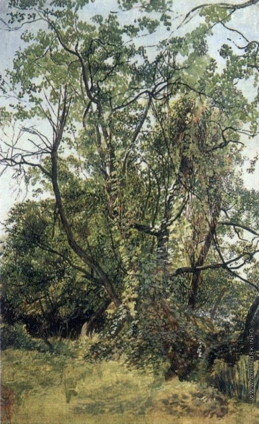 Иванов А. А. Зелень, вьющаяся по деревьям