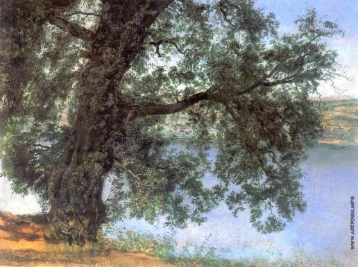 Иванов А. А. Дерево в тени над водой в окрестностях Кастель-Гандольфо