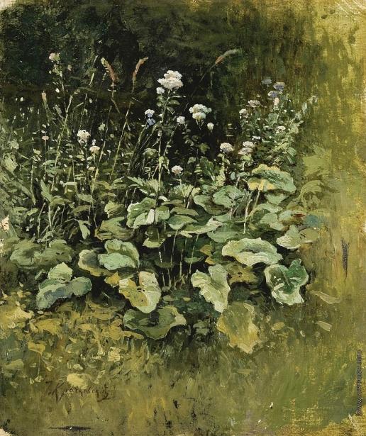 Крачковский И. Е. Дикие травы