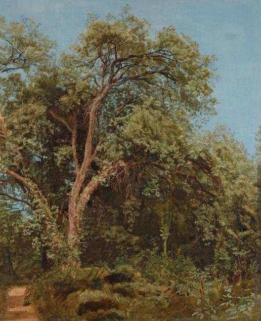 Иванов А. А. Дерево в парке Киджи