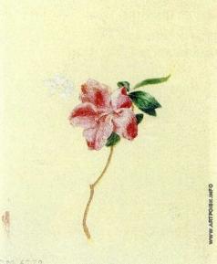 Гагарин Г. Г. Цветок азалии