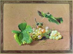Толстой Ф. П. Ветка винограда