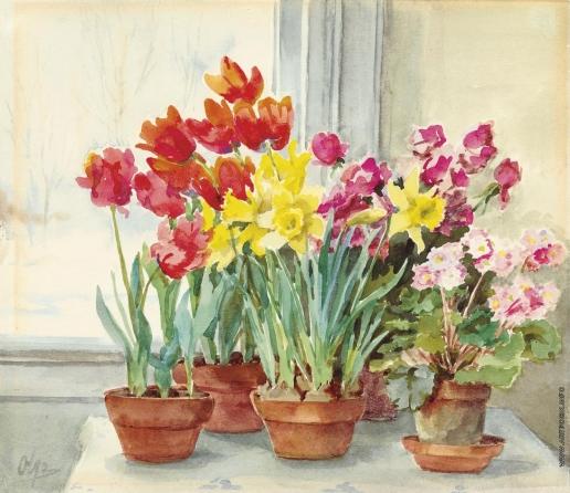 Романова О. А. Нарциссы, тюльпаны и фиалки в горшках