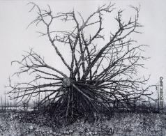 Ярославцев А. И. Упавшее дерево