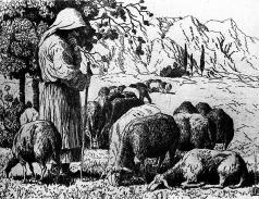 Шиллинговский П. А. Бессарабия. Овцы