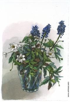 Дергилева А. И. Летние цветы