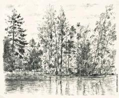 Верейский Г. С. Деревья у озера