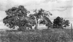 Французов Б. Ф. Деревья в поле