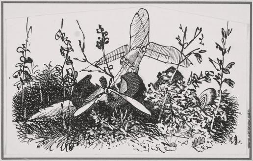Тамби В. А. Обломки самолета