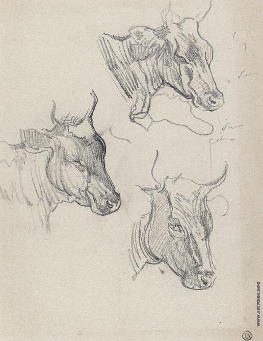 Серов В. А. Голова быка