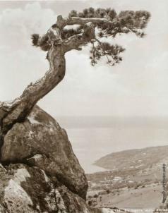 Сокорнов В. Н. В горах над Алупкой