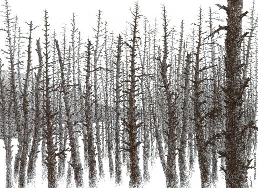 Демков С. Б. Из серии «Сибирский лес». Черно-белое безмолвие