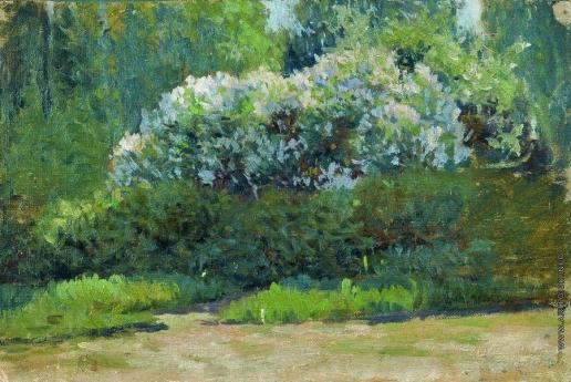 Жуковский С. Ю. Цветущий куст. (Сирень)