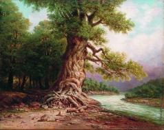 Занковский И. Н. Старый дуб у реки