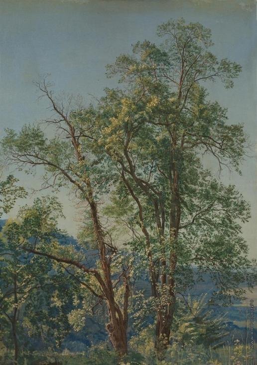 Иванов А. А. Оливковое дерево. Долина Аричча