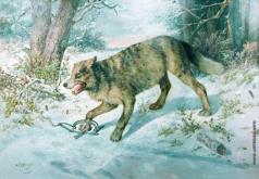 Сверчков Н. Е. Попался волк
