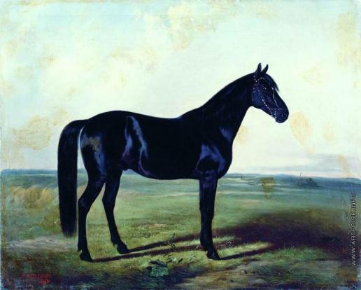 Сверчков Н. Е. Черная лошадь