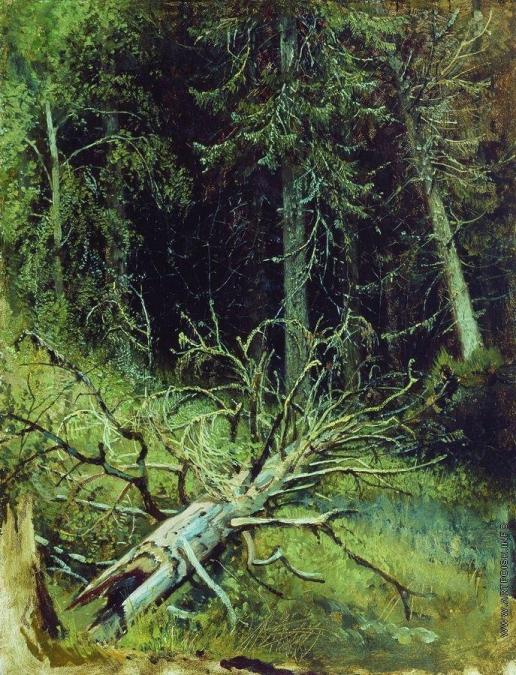 Шишкин И. И. В еловом лесу