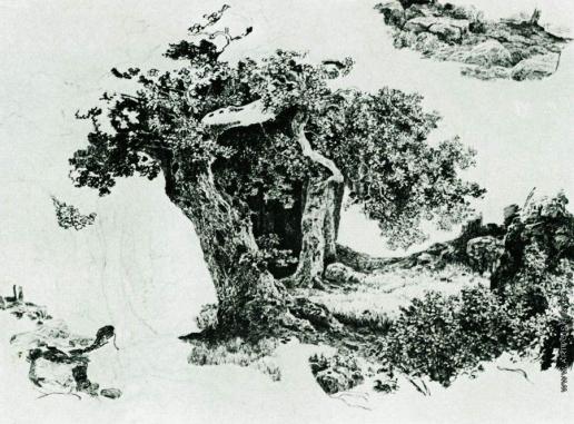 Шишкин И. И. Группа лиственный деревьев и камни. Набросок