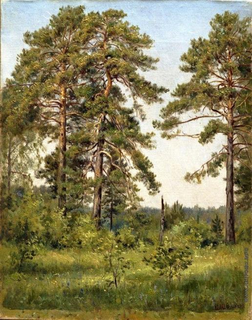 Шишкин И. И. Опушка соснового леса