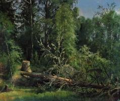 Шишкин И. И. Срубленное дерево
