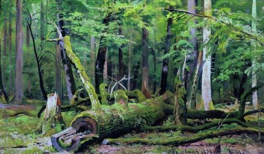 Шишкин И. И. Срубленный дуб в Беловежской пуще