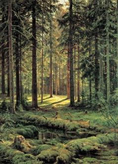 Шишкин И. И. Хвойный лес. Солнечный день