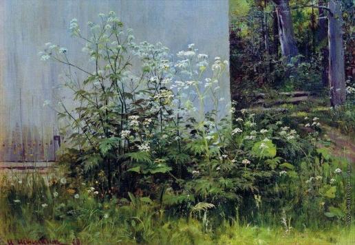 Шишкин И. И. Цветы у забора