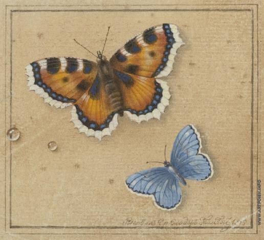 Толстой Ф. П. Бабочки